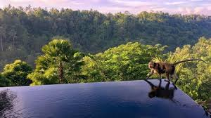 104 Hanging Gardens Bali Hotel The Best S With A Pool In Indonesia