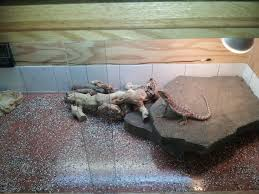 Bearded Dragon Heat Lamp Broke by Bearded Dragon Cage Bearded Dragon Cage Pinterest Dragon