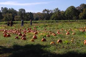 Pumpkin Picking Maryland by Home