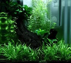 comment réaliser un paysage aquascape avec un nano de 15 l