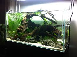 Cool Fish Tanks Ideas In Admirable Fish Tank Idea Ideas Fish Tank ... The Fish Tank Room Divider Tanks Pet 29 Gallon Aquarium Best Our Clients Aquariums Images On Pinterest Planted Ten Gallon Tank Freshwater Reef Tiger In My In Articles With Good Sharks For Home Tag Okeanos Aquascaping Custom Ponds Cuisine Small Design See Here Styfisher Best Unique Ideas Your Decoration Emejing Designs Of Homes Gallery Decorating Coral Reef Decorationsbuilt Wall Using Resonating Simplicity Madoverfish Water Arts Images