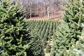Christmas Tree Farms In Boone Nc by A Blonde A Boy And A Blog 2014