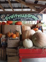 Sarasota Pumpkin Festival by Fruitville Grove Farmers Market Sarasota Florida 204