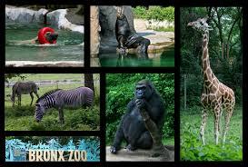 Bronx Zoo Halloween 2014 by Weekendguidetofun Com Where Good Times Are Found