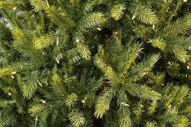 Dunhill Fir Christmas Trees by 8ft Pre Lit Kensington Fir Life Like Artificial Christmas Tree