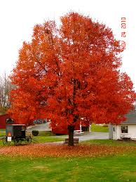 Best Pumpkin Patch Lancaster Pa by Lancaster Pa His Beauty Pinterest Lancaster Pennsylvania