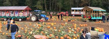 Pumpkin Picking Richmond by 14 Pumpkin Patches Near Vancouver You Need To Visit This Fall