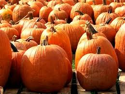 Pittsburgh Area Pumpkin Patches by Best Pumpkin Patches In South Bay Cbs San Francisco