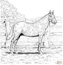 Appaloosa Horse Coloring Page