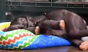 Baby Elephant Plays In Kiddie Pool Internet Goes Crazy