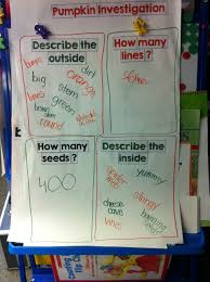Can Guinea Pigs Eat Cooked Pumpkin Seeds by Pumpkin Kristen U0027s Kindergarten