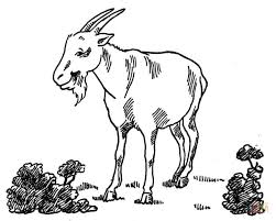 Click The Goat At Garden Coloring Pages