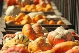Pumpkin Patch Farm Temecula by Peltzer Farms Temecula Ca Top Tips Before You Go With Photos