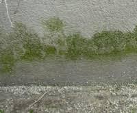 anti mousse murs exterieurs humidité façade crépis fongicide anti mousse murs extérieurs