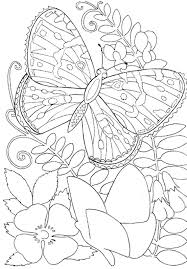 Print For Adults Coloring Pages Free Printable Butterfly