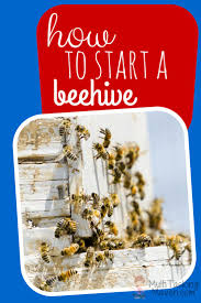 25+ Trending Starting A Beehive Ideas On Pinterest | Beekeeping ... Hive Time Products A Bee Adventure For Everyone Bkeeping Everything You Need To Know Start Your First Best 25 Raising Bees Ideas On Pinterest Honey Bee Keeping The Bees In Your Backyard Guide North Americas Joseph Starting Housing And Feeding Top Bar Beehive Projects Events Level1techs Forums 562 Best Images Knees 320 Like Girl 10 Mistakes New Bkeepers Make Splitting Hives Increase Cookeville Bkeepers Nucleus Colony Or How A 8 Steps With Pictures