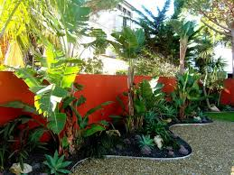 Decorative Banana Trees And Palm Trees For Tropical Landscape ... Tropical Backyard Landscaping Ideas Home Decorating Plus For Small Front Yard And The Garden Ipirations Vero Beach Melbourne Fl Landscape And Installation Design Around Pool 25 Spectacular Pictures Decoration Inspired Backyards Excellent Florida Create A Nice Designs Decor