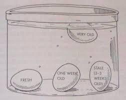 bad eggs float or sink best 25 if eggs float ideas on egg float test egg