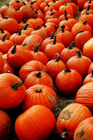 Pumpkin Patch Nj Chester by 112 Best Pumpkin Patches Images On Pinterest Autumn Leaves Fall