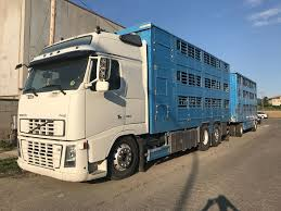 VOLVO FH16-660HP-6X2 Livestock Trucks For Sale, Cattle Truck From ... Cattle Transport Truck In Morocco Editorial Stock Image Of 100lt 20 Livestock Tractor Trailer Bateson Trailers 2004 Volvo Fm9 Rigid 6x4 Sheep Goat For Sale Trucks For Hire Willow Creek Ranch Live Atlas Plowman Containers Brothers 35 X 18 Cattle Trailers Sale Junk Mail Boxes Used P D Commercials Jm Welding Tamworth Australian Crate Specialists Versatility Makes Heavy Duty Hino The Right Choice Auto Moto Cannon Manufacturers Makers 1970 M35a2 Turbo Feed Truck Sale