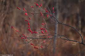 Winterberry Christmas Tree Farm by Samhain In New Jersey