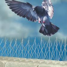 bird spikes 3 per 1m pack totally harmless instantly