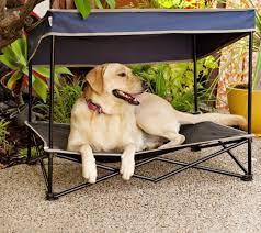 coolaroo pet bed video large dog beds coolaroo kuranda style