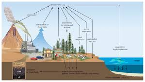 Define Carbon Sink Geography by Why Is The Carbon Cycle Important