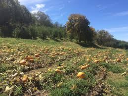 Oak Glen Pumpkin Patch Yucaipa by Riley U0027s Farm U2013 Fall Fun Adventure U2013 Monica Goes