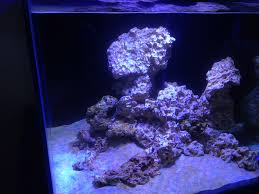 In2Deep • View Topic - Aquascaping -