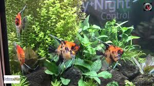 aquarium d eau douce interzoo 2016 les aquariums d eau douce