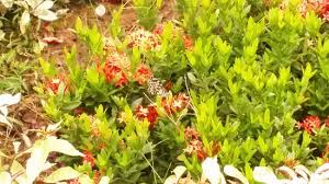 Live butterfly garden Picture of Nilambur Teak Museum
