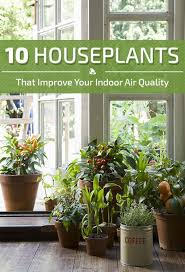 Best Pot Plant For Bathroom by 10 Houseplants That Improve Indoor Air Quality