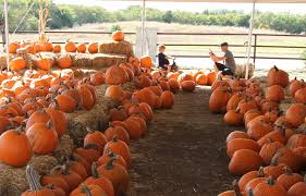 Pumpkin Patch Portland by Image Sneak Peek Best Pumpkin Patches In Fort Worth U2013 Tcu 360