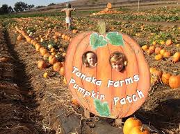 Cal Poly Pomona Annual Pumpkin Patch by The Ultimate Guide To Pumpkin Patches In Southern California