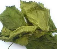What Is Mulberry Leaf It Used For