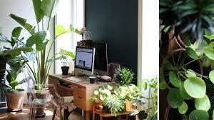 le bureau verte le bonheur est dans les plantes vertes c est prouvé