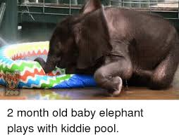 Dallas Elephant And Pool DALLAS ZOO 2 Month Old Baby Plays With