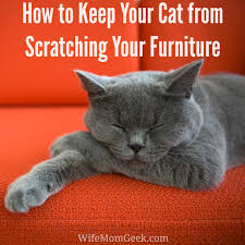 cat stop how to stop a cat from scratching your furniture