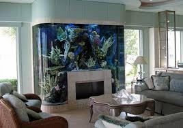 aquarium fische einen exotischen und beruhigenden akzent