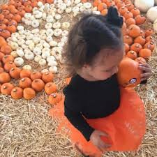 Monrovia Pumpkin Patch by Pasadena Pumpkin Patch 102 Photos U0026 67 Reviews Pumpkin Patches