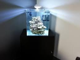 aquarium nano eau de mer nano recifal de 60l aquariophilie org