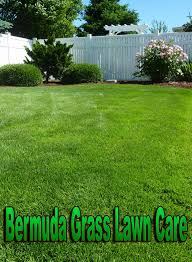 Bermuda Grass Lawn Care - Quiet Corner Backyard Summer Fun Family Acvities Easyturf Artificial Grass 17 Low Maintenance Landscaping Ideas Chris And Peyton Lambton Putting Green Turf For Golf Progreen Looks Can Be Deceiving Home Ritas Ramblings Buy Your Our Makeover Part 2 The Process Emily Henderson Backyard Ideas No Grass Landscape Design Front Yard Lawn Best 25 Fake On Pinterest Bq Small Lawn Garden Design Using Feat Lawns Picture Gallery Works Care Austin Tx Seattle Bellevue Installation Synthetic How Much Does It Cost To Reseed A Yard Angies List