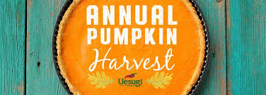 Uesugi Farms Pumpkin Patch by Uesugi Farms Begins Harvest Of Annual Pumpkin Varieties And Now