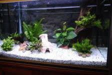 poissons aquarium en rhône alpes annonces achat vente de