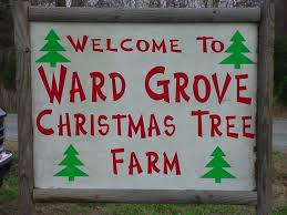 Christmas Tree Baler Netting by Ward Grove Christmas Tree Farm Pictures