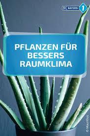zimmerpflanzen raumklima luftfeuchtigkeit schadstoffe