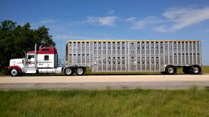 Blackjack Livestock - Cattle Maps Trucking The Worlds Best Photos Of 389 And Livestock Flickr Hive Mind About Metzger Agricultural Exemptions Instated For Regulations Pork Firms Worried Electronic Logging Device Could Hurt Henderson Jobs Otr Long Haul Truck Drivers West Land Cattle Hauler Jessica Lorees 2003 Pete 379 Livestockcattle Haulers Sale Llc Kenworth T800 With 4 Axle Tra Truck Spill Cleaned Up A Lot Help Krvn Radio Australian Livestock Rural Transporters Association