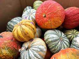 Preserve A Carved Pumpkin And Prevent Mold by Decorating Eating And Composting For A Sustainable Halloween