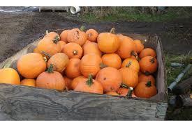 Papas Pumpkin Patch Hours by Tricounty Farm Fresh